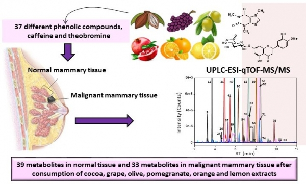 Imagen blog de Metabolic profiling of dietary polyphenols and methylxanthines in normal and malignant mammary tissues from breast cancer patients: The POLYSEN trial