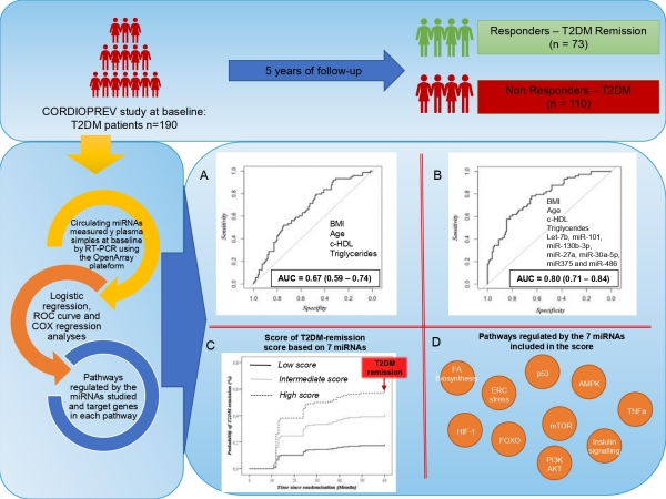 Imagen blog de A set of miRNAs predicts T2DM remission in patients with coronary heart disease: from the CORDIOPREV study